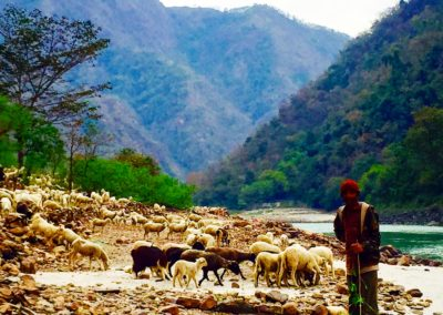 A shepherd and his flock on the Ganges